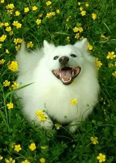 Makoa ( buttercups can make puppies sick but thank goodness he didn't)