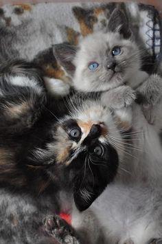 .sweet kittens