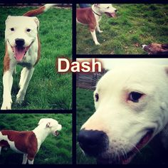 This cheeky chappy Dash is urgently looking for a rescue space :( He has been waiting since early February! :( #safeandsound #rescue #rescuedog #dontshopadopt #dog #newlife #happy #love #givesomuch #giveadogachance #somanyneedanewhome #adoption #pet #beautiful #bestfriend #mansbestfriend www.safe-and-sound.org