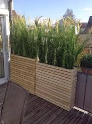 Image result for best plants for privacy screen
