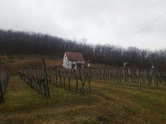 Winery vilage