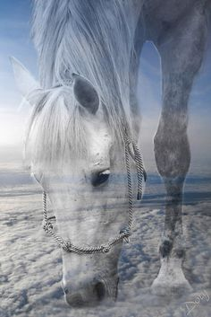 "~~Beauty Up Above by Doty ~ photographer's childhood best friend, a beautiful white horse ""Beauty"" ~ created by photographer after a vivid dream~~"