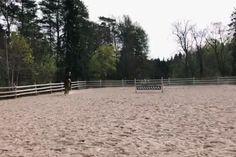 Equestrian - Art Of Equitation Horses Jumping Videos, Horse Videos, Funny Horses, Cute Horses, Most Beautiful Horses, English Riding, Appaloosa Horses, Horse Quotes, Cute Animal Photos