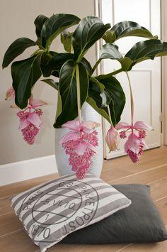 exotisches pflanzen ambiente f r zuhause dekorieren pinterest pflanzen exotische pflanzen. Black Bedroom Furniture Sets. Home Design Ideas