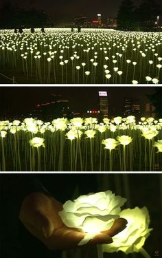 A field of illuminated roses has arrived in Hong Kong for Valentine's Day - loreen Landscape Lighting, Outdoor Lighting, Landscape Architecture, Landscape Design, Site Art, Instalation Art, Decoration Evenementielle, Interactive Art, Luminaire Design