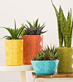 food presestation risers plant pots - Google Search