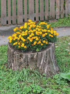 flowers in a tree stump | Recycling Tree Stumps for Yard Decorations to Remove Tree Stumps .