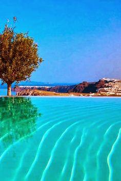 Olive Tree in Pyrgos, Santorini, Greece.