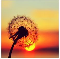 Sun sets with a wish Visit us for more interesting pictures.....