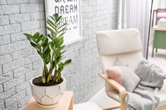 ZZ Plant Care Guide: Growing Information and Tips Ivy Plants, Hardy Plants, Small Plants, Cool Plants, Calathea, Zz Plant Care, Plante Zz, English Ivy Plant, Cool Office Space