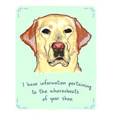 Confessions of a labrador, or almost any dog.