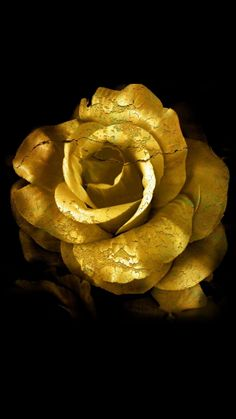 54 Trendy Wallpaper Rose Com Dourado Gold Wallpaper, Trendy Wallpaper, Flower Wallpaper, Wallpaper Backgrounds, Wallpaper Ideas, Tumblr Roses, Purple Gold, Black Gold, Wallpaper Fofos