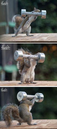Rock on, Squirrel!