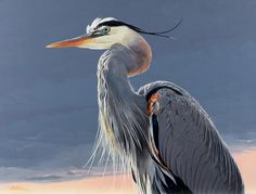 blue heron image | Animal of the day – 02/28/2014 – The Great Blue Heron