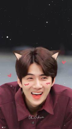sehun cute My cute cat. Park Chanyeol, Baekhyun, Sehun Cute, Exo Lockscreen, New Daddy, Kim Jongdae, Kim Min Seok, Kpop Exo, Exo Members