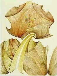John Bevan Ford. Maori Designs, Nz Art, Maori Art, Native Art, Lesson Plans, New Zealand, Art Ideas, Objects, Ford