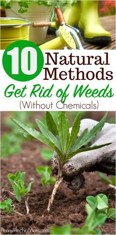 Expert gardening tips to help you kill weeds naturally! Yep! Chemical free and 100% natural ways to rid your garden and lawn of weeds! gardening | gardening tips | how to garden | get rid of weeds | weeding | killing weeds | how to kill weeds #gardening #killingweeds #getridofweeds #naturalgardening