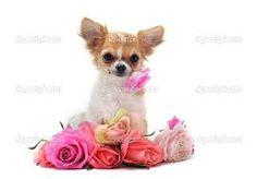 Afbeeldingsresultaat voor schattige puppies achtergronden