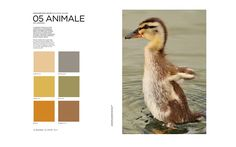 Colors Fall Winter 2016/2017 ANIMALE - Brown/Ochre/Sand/Beige/Grey Peclers Paris