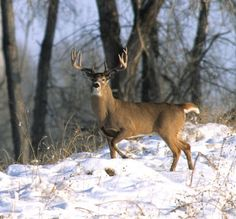 Hunting Whitetail Deer my-hobbies
