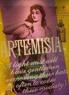 Artemisia, Foto: S. Hopp