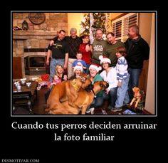 Cuando+tus+perros+deciden+arruinar+la+foto+familiar