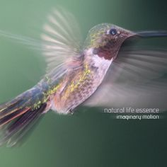 New Release | CYAN 052 | Natural Life Essence - Imaginary Motion...