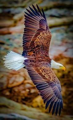 WOW!! - SUCH AN INCREDIBLE SHOT, OF AN AMAZING BIRD! Bald Eagle, Eagles, Eagle