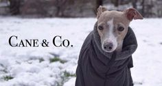 Company Makes Tailored Doggy Snowsuits for the Poshest of Pups http://www.wideopenpets.com/check-out-these-doggy-snowsuits/