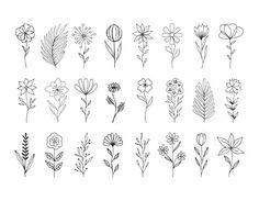design png Svg flowers with stems. Simple Flower Drawing, Floral Drawing, Simple Flower Design, Flower Design Drawing, Leaf Drawing, Drawing Flowers, Plant Drawing, Floral Doodle, Illustration Blume