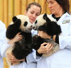 Toronto Zoo reveals names of twin pandas