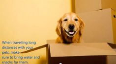 #moving #tips #pets
