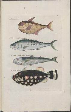 FISH Samuel Fallours 4