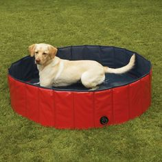 This pool is designed just for dogs and has a thicker outside than a standard plastic pool. It holds the water and it's taller so your pet can really immerse themselves in water.
