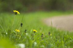 https://flic.kr/p/etkSjS | Der Frühling fällt 2013 aus | Regen, Regen, Regen,...  Wo bleibt die Sonne? Wie sieht eigentlich blauer Himmel aus?  Kamera: Panasonic Lumix DMC-G1 Objektiv: Helios-44-2 2/58 Brennweite: 58mm Blende: f/2 Belichtung: 1/800  analoge Welten │ Goolge+