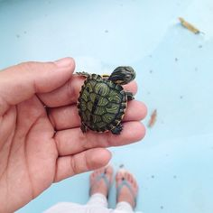 This is so cuteeee!!!! I want a turtle