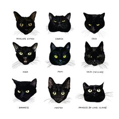 Open Book: All Black Open Book: All Black Cats Are Not Alike Chronicle Books Medium All Black Cat, Black Cat Art, Black Cats, Black Cat Drawing, White Cats, Gato Animal, Warrior Cats, Beautiful Cats, Beautiful Pictures