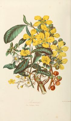 Illustrations of the natural orders of plants with groups and descriptions, 1868 by Elizabeth Twining Now in the Public Domain. Botanical Drawings, Botanical Art, Botanical Illustration, Small Flowers, Love Flowers, Historia Natural, Free Artwork, Exotic Plants, Wall Collage