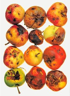 irving penn still life  *using fruits out of the bottom of the fridge* lol
