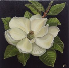 Oil Painting of Magnolia, Still Life, Original Oil, White Magnolia,Floral Painting, White Flower, painting of magnolia, 8x8 Stretched Canvas
