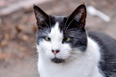 This homeless cat is struggling to find a new family for Christmas – because she's cross-eyed.  Bob used to live above a newsagents with her owner until he disappeared in the middle of the night two years ago.  Since then staff at McColl's newsagents in Jubilee Crescent, Coventry, have let her sleep