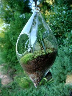 Hanging TeardropTerrarium Glass Mondo Grass by MossTerrariums