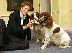 Harry with his housemasters dogs  Rosie & Jenny at Eton College.