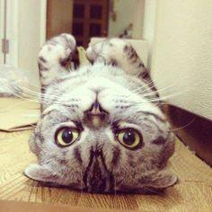 cute cute cute :3