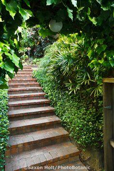 Brick path steps leading up hill inside entry gate to Worth garden, California Garden Stairs, Brick Garden, Garden Paths, Garden Landscaping, Landscaping Ideas, Landscape Bricks, Landscape Plans, Landscape Design, Garden Design