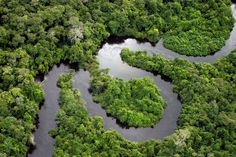 Amazon Rainforest - Flickr RF/Getty Images