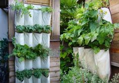 DIY Vertical Herb Garden with a Shoe Organizer Confounded by vegetable digging cats and toiling in the vegetable patch, Instructables member came up with this cool DIY vertical garden solution. In case you don't recognize it, she used an old closet shoe Herb Garden Planter, Herb Planters, Planter Ideas, Hanging Planters, Gutter Garden, Hanging Herbs, Hanging Gardens, Succulents Garden, Porch Planter