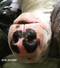 upside down and snoozing!
