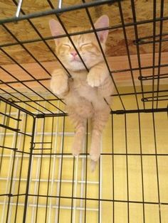 What's up with cats and their napping spots?! lol!
