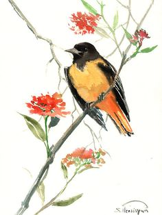 Baltimore Oriole Original watercolor painting 12 X by ORIGINALONLY, $26.00